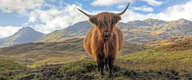 scotland-Group-Tours